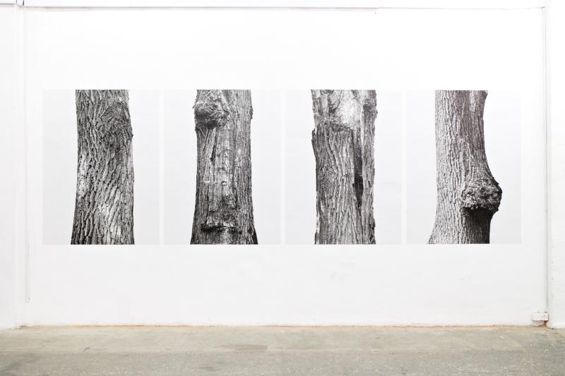 trees_minsk2